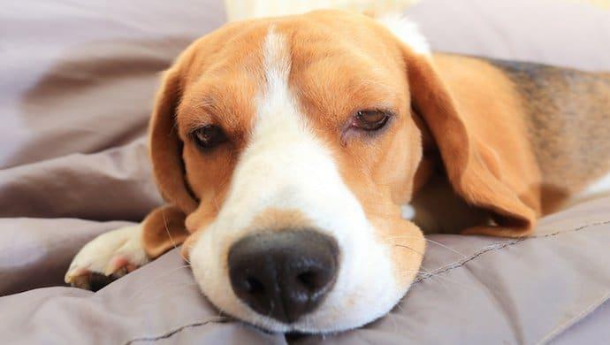 Épilepsie chez le chien : 4 signes qui mettent en garde