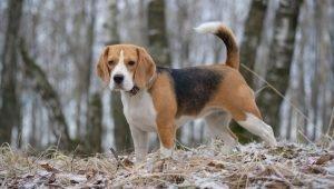 Transport Chiot Voiture - 10 techniques à savoir - Les bases de l'éducation canine - Facilement