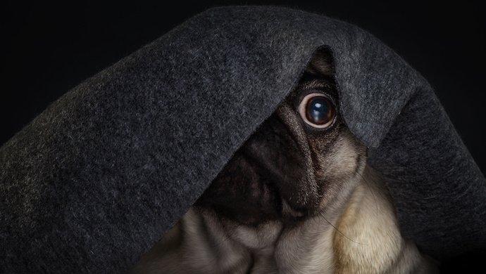 Manque de socialisation du chien: 7 comportements gênants au quotidien