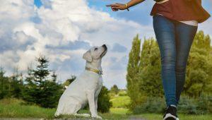 règle des 3D en éducation canine