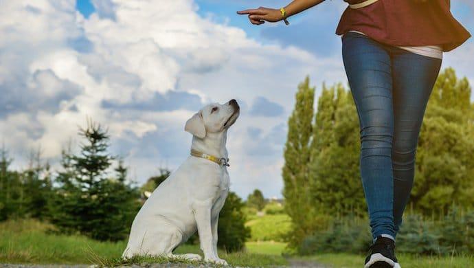 Qu'est-ce que la règle des 3D en éducation canine ?