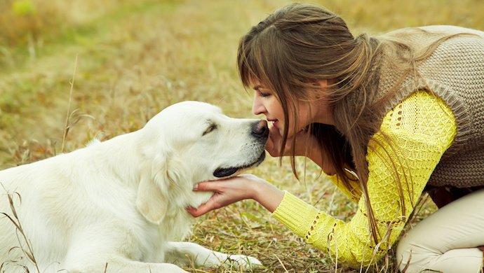 ordres à apprendre à son chien
