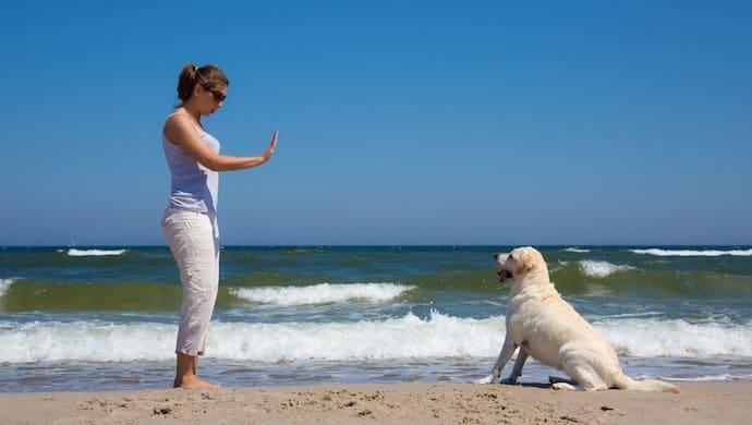 7 exercices que tout bon chien doit connaître