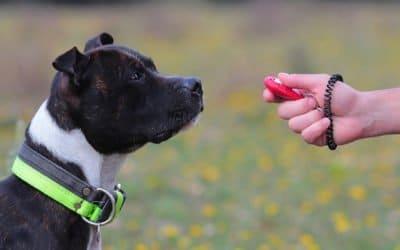 Clicker Training : Une méthode d'éducation canine qui fonctionne