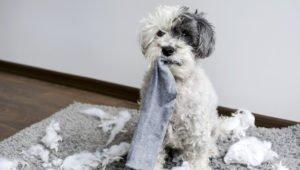 Apprendre la solitude à son chien