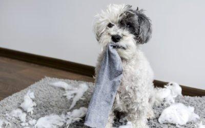 Guide complet : Apprendre la solitude à son chien