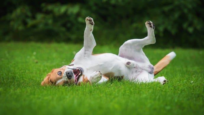 3 tours simples et amusants à apprendre à son chien (Tourne, Roulé-boulé, Slalom)