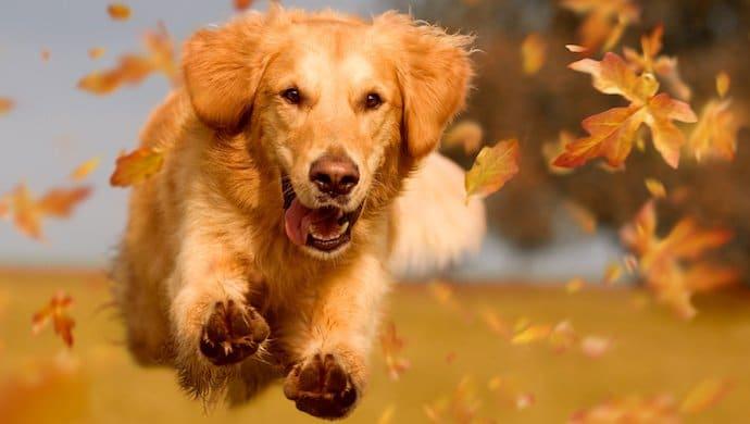 Guide complet :  Apprendre le rappel à son chien
