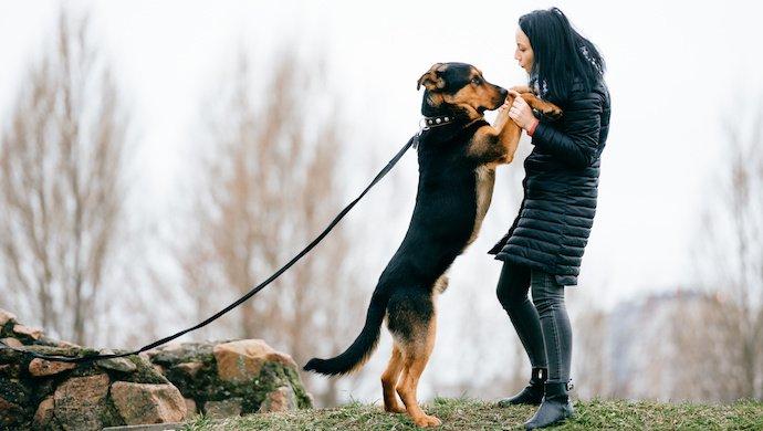 Guide complet : Apprendre à son chien à ne pas sauter