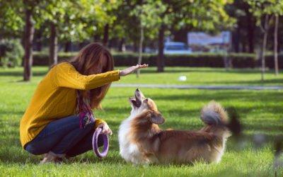 Comment apprendre les ordres de base à son chien (Assis Couché et Debout) ?