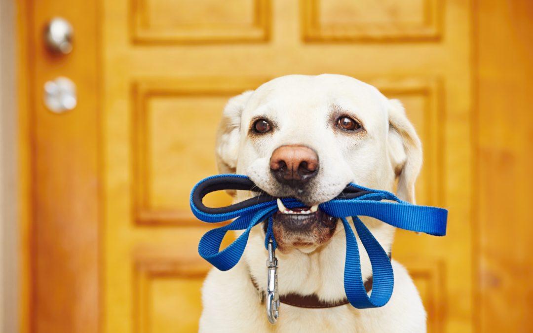 Dressage Malinois - 10 astuces à savoir - Comme les pros - Blog chien