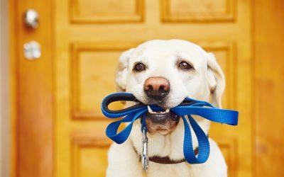 Education canine : top 5 des accessoires pour éduquer son chien