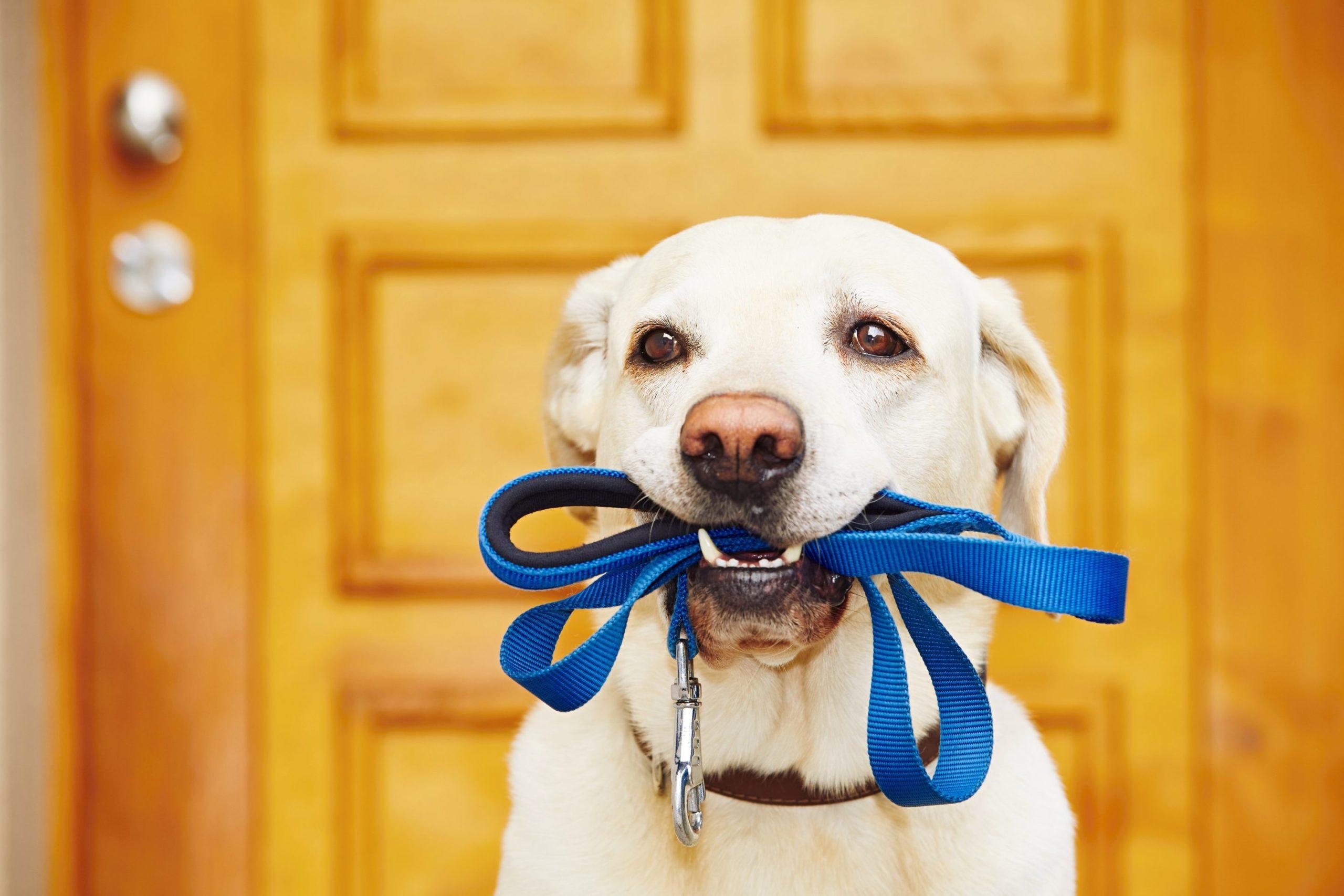 accessoires pour éduquer son chien