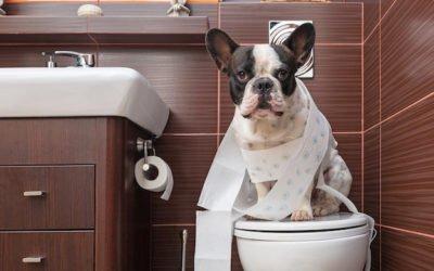 Guide complet : la propreté chez le chien