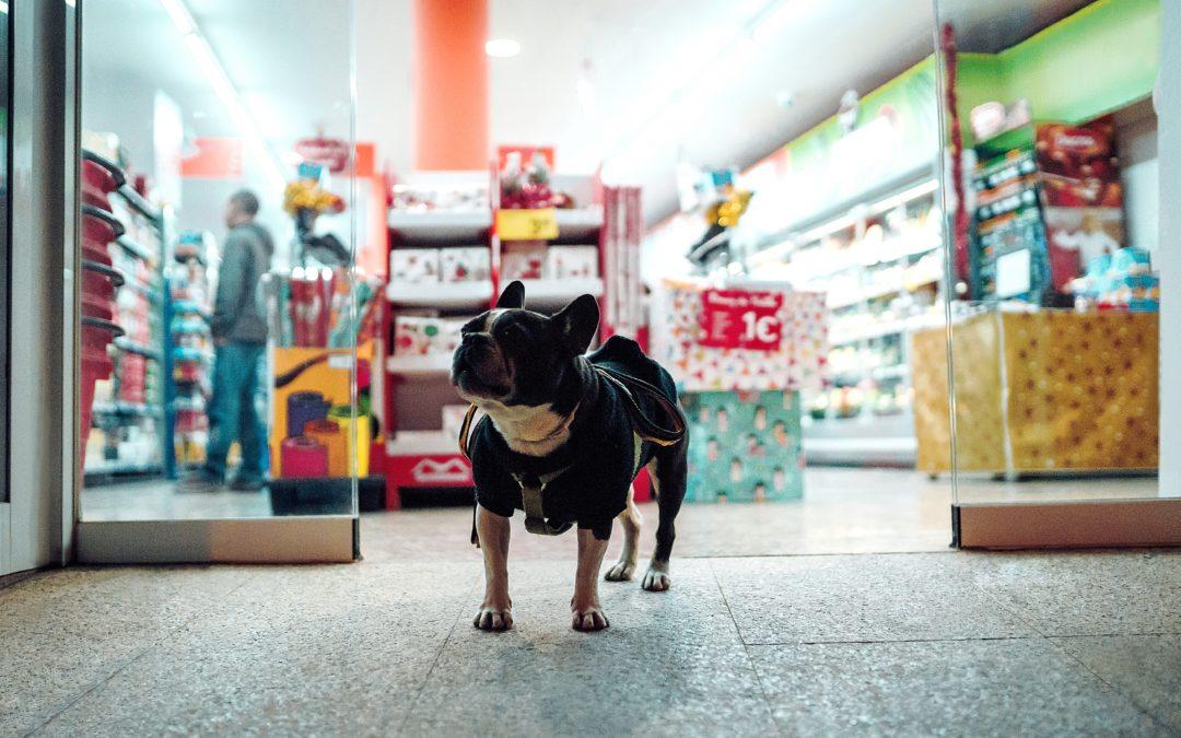 Comment réduire le bilan carbone du chien?