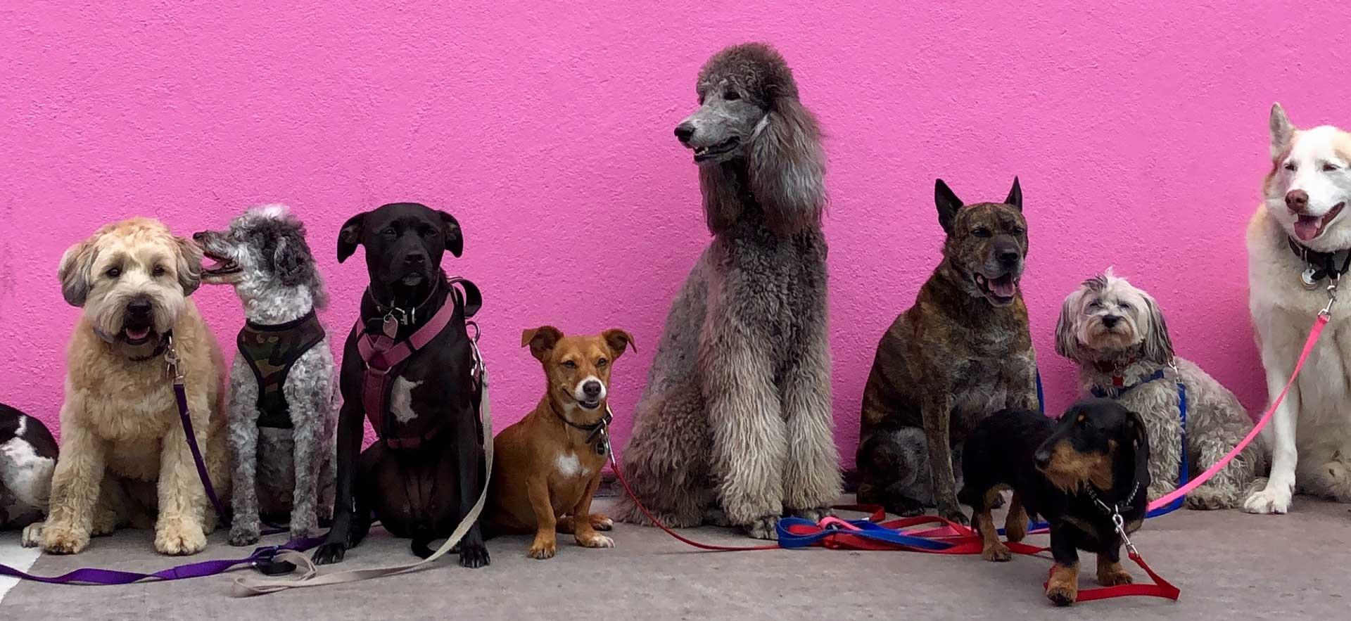 Des produits testés par de nombreux chiens - boutique nos amis les chiens