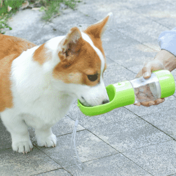 gourde pour chien