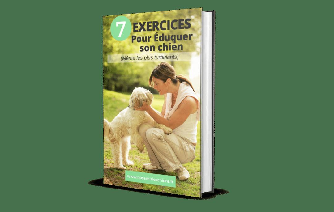 7 exercices pour éduquer son chien (même les plus turbulants)