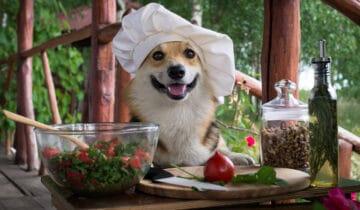 Dog Chef : Notre Avis sur les produits et le service