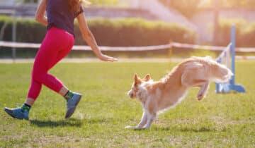 17 activités canines à pratiquer avec son chien