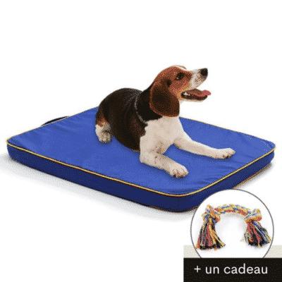 lit orthopédique chien bleu