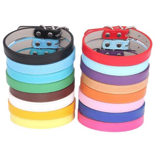 collier pour chien coloré