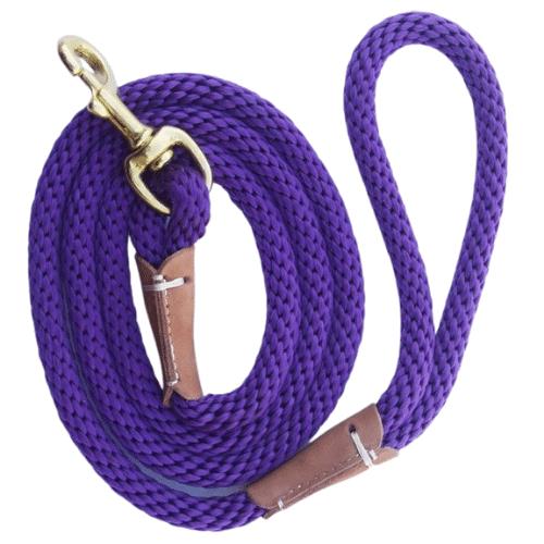 laisse pour chien violet
