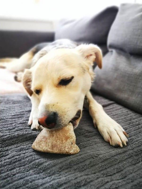 Sabot de veau pour chien