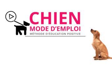 Chien Mode d'Emploi : Notre avis sur ce programme d'éducation canine en ligne