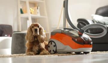 Thomas Aqua+ Pet & Family : Notre avis et test de cet aspirateur/laveur spécial poils de chien