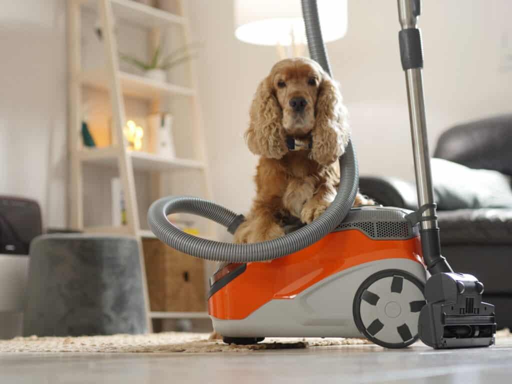 aspirateur spécial poil de chien