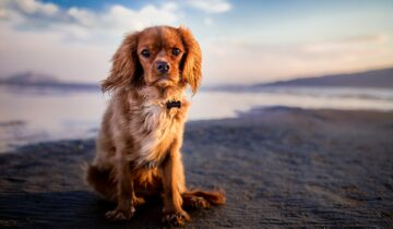 Partir en vacances avec son chien : où & comment ?