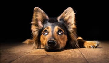 Mon chien mange des cailloux : Pourquoi et comment l'empêcher d'avoir ce comportement ?