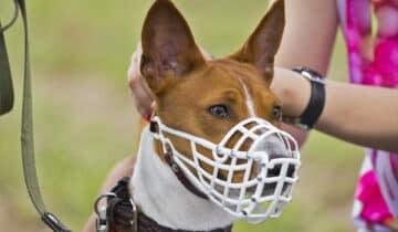 Muselière pour chien : comment la choisir ou la fabriquer et pour quelle race de chien ?